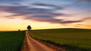Camino en prados verdes