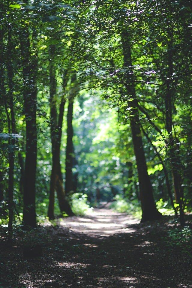 Sendero en un bosque