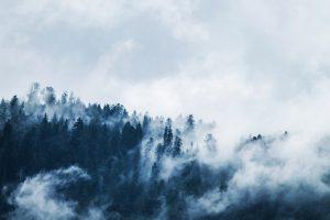 Bosque nublado